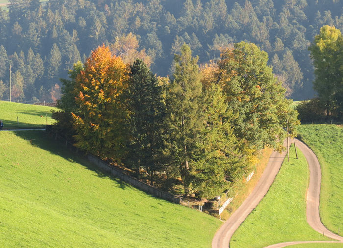 Emmental Switzerland Heart From Trees Photography October 2017 Shadows & Light Autumn🍁🍁🍁 Beauty In Nature Day Field Forest Grass Green Color Growth Landscape Nature No People Outdoors Scenics Sky Street Tranquil Scene Tranquility Tree Perspectives On Nature