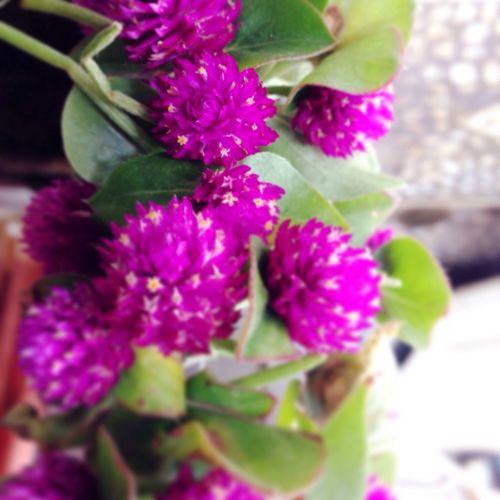 Flowers Naturelover