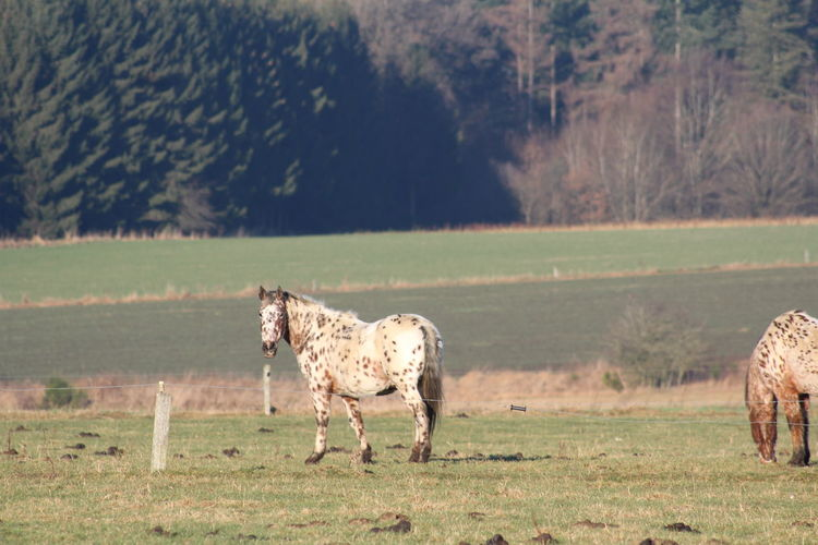 Promenade en ardenne Animal Nature No People Rural Scene Landscape Agriculture Beauty In Nature Domestic Animals Horse Belgium Bastogne Ardennen Belgium