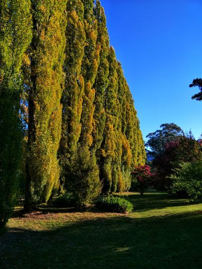 Autumn colors Tree Sunlight Sky Grass Hedge Growing Formal Garden Botanical Garden Garden