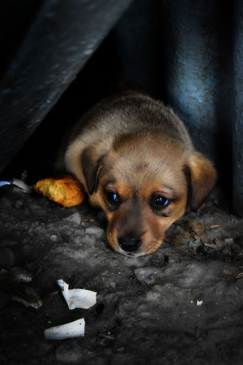 Anguish Animal Themes Close-up Day Dog Domestic Animals Indoors  Light And Shadows Loniless Looking At Camera Mammal No People One Animal Pets Place Of Heart Portrait Puppy Twillight Young Animal