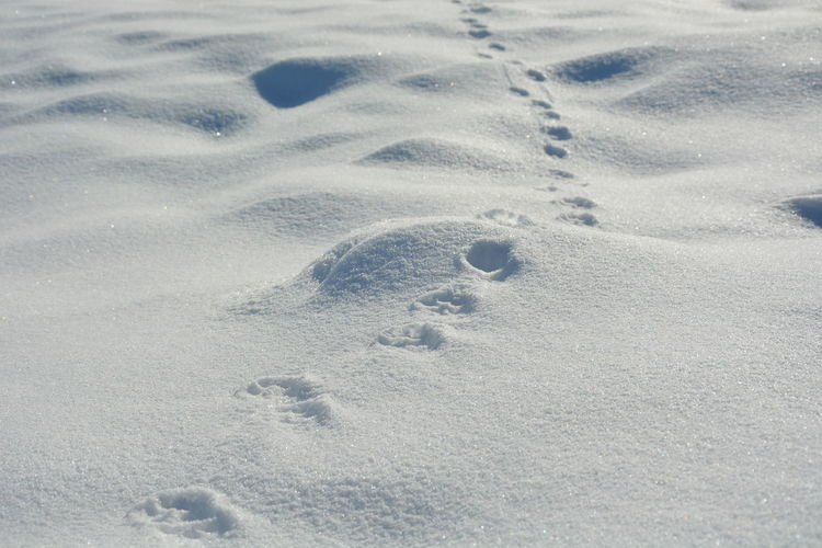 Snow Winter Cold Temperature No People Land High Angle View FootPrint Nature Day Paw Print Print Animal Track White Color Field Track - Imprint Covering Outdoors Full Frame Absence