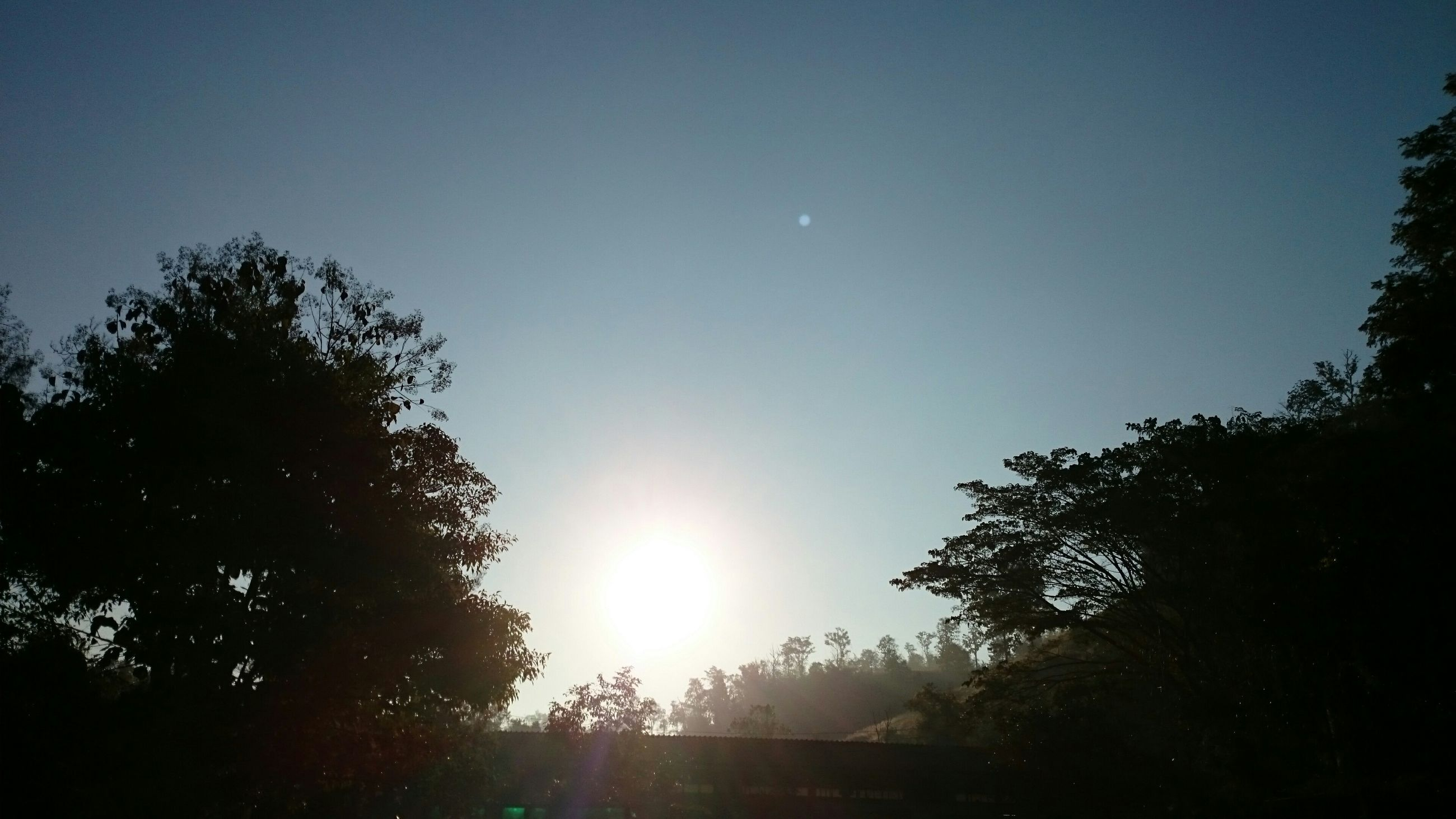 sun, tree, clear sky, sunbeam, sunlight, lens flare, tranquility, beauty in nature, silhouette, tranquil scene, scenics, nature, copy space, blue, low angle view, growth, bright, sky, sunny, idyllic