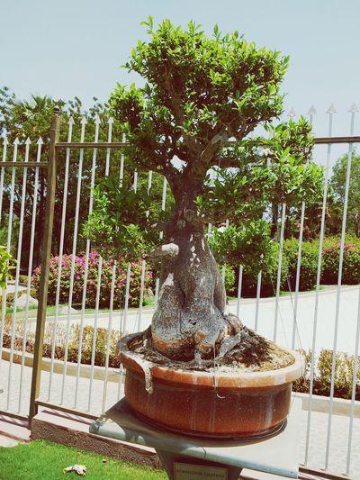Nature b Bonsai Tree PLZ FOLLOW ME