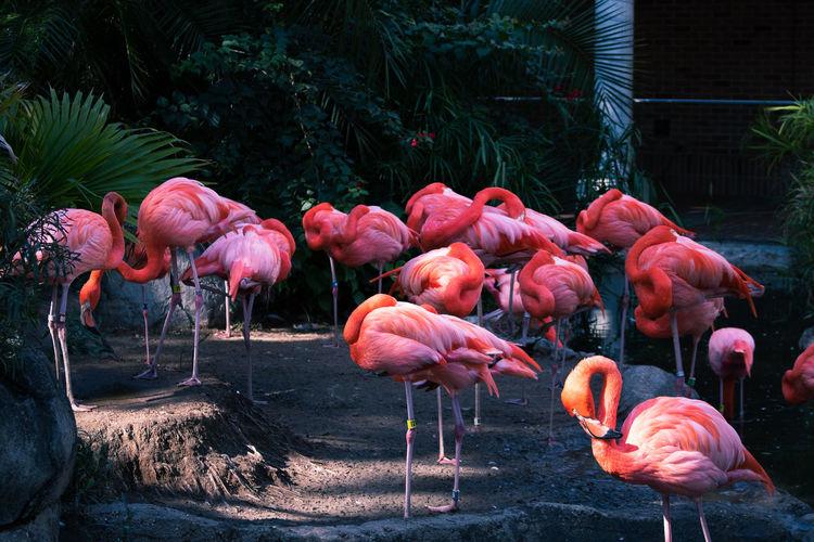 View of flamingos in lake