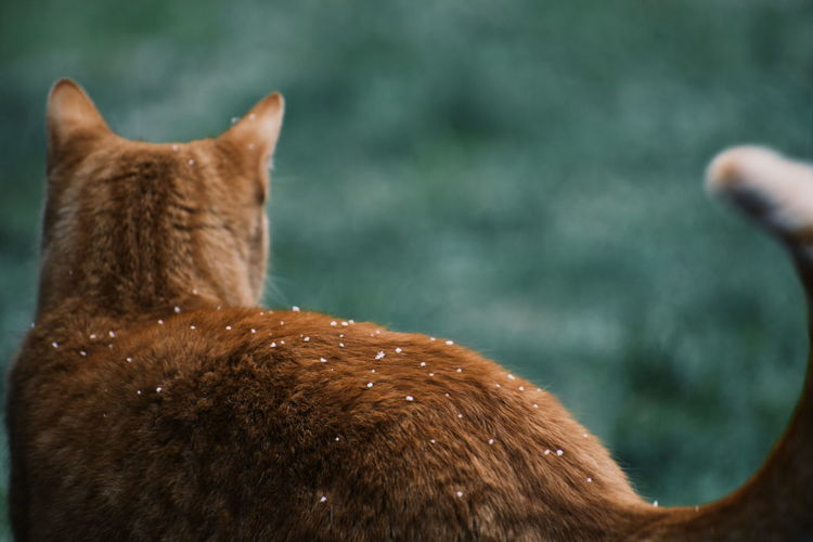 Cat Snow Winter Cold Temperature Cold Flakes Animal Domestic Animals Feline Brown Animal Themes Mammal One Animal Animal Wildlife Close-up Focus On Foreground Vertebrate Animal Body Part Day Rear View Animal Hair Animals In The Wild Animal Head  Domestic Pets A New Beginning My Best Photo