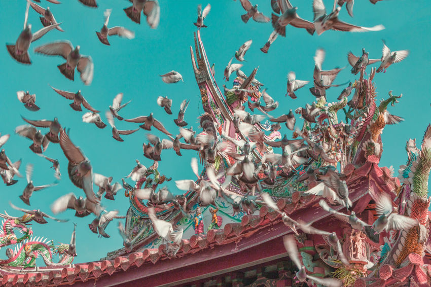 Fly Believe Bird Close-up Day Dove Low Angle View Nature No People Outdoors Sky Temple Tree