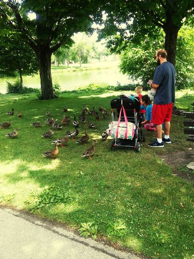 Duck Feeding AndroidPhotography