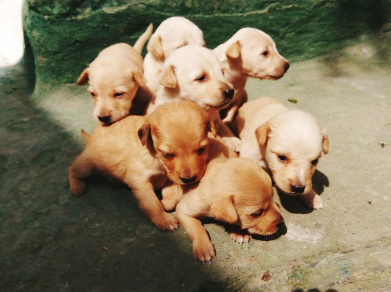 EyeEm Young Animal Domestic Animals Babydogs Togetherness Love RedmiNote3Camera