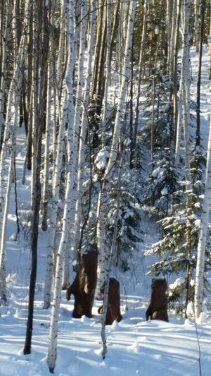 Snow Cold Temperature Winter Tree Nature White Color Forest Branch Outdoors Animal Themes Beauty In Nature No People Landscape Domestic Animals Day Mammal