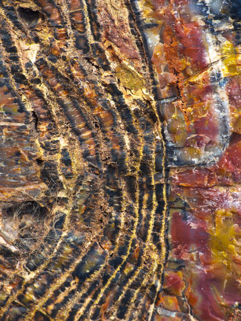 Close up of petrified wood in the painted desert of Arizona Abstract Abstract Backgrounds Arizona, Painted Desert, Geology Backgrounds Beauty In Nature Close-up Day Eroded Mineral Multi Colored Natural Pattern Nature No People Outdoors Pattern Petrified Forest Petrified Wood Rock Rock - Object Rock Formation Rough Solid Textured