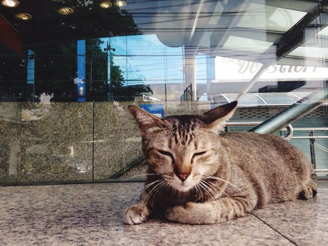 Sleepy MRT cat Mrt Thai Street Cat At Underground Bangkok Jatuchak 8:30 Sleepy Entry Gate Thai Cat Morning Sit Tide