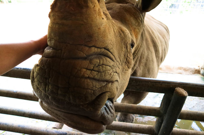 Animal Themes Animals In The Wild Close-up Day Elephant Human Body Part Human Hand Mammal Nature One Animal Outdoors Rhinoceros Pet Portraits