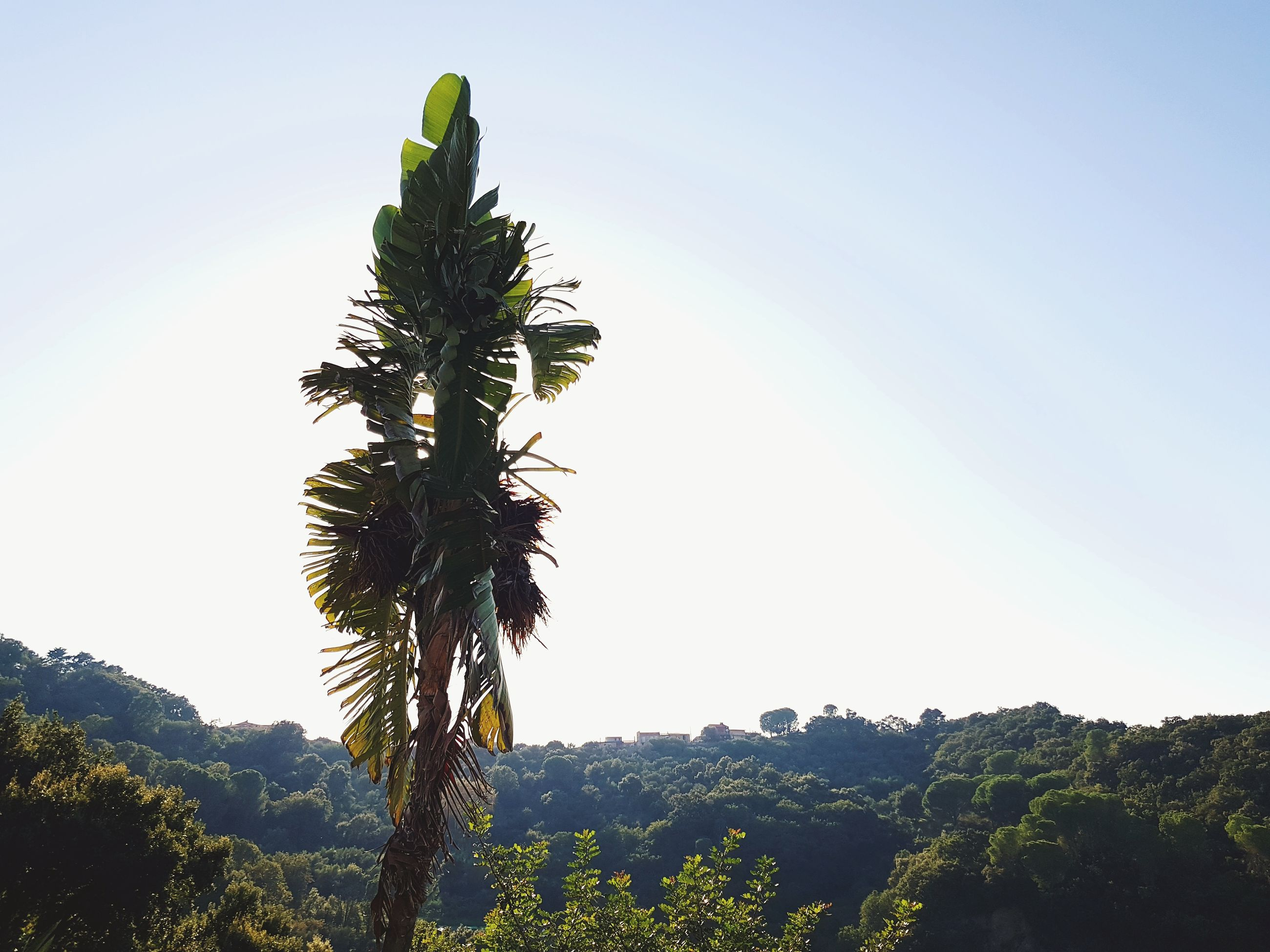 plant, sky, growth, beauty in nature, tree, nature, tranquility, green color, scenics - nature, tranquil scene, day, clear sky, no people, landscape, environment, sunlight, outdoors, non-urban scene, mountain, copy space