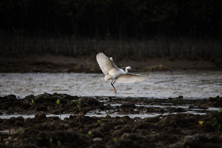 Bird flying over the beach