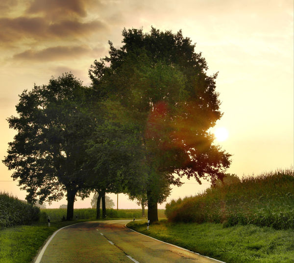 Beauty In Nature Cloud Cloud - Sky Country Road Diminishing Perspective Empty Empty Road Field Grass Green Color Growth Idyllic Landscape Nature No People Outdoors Road Scenics Sky Sunset The Way Forward Tranquil Scene Tranquility Tree Vanishing Point