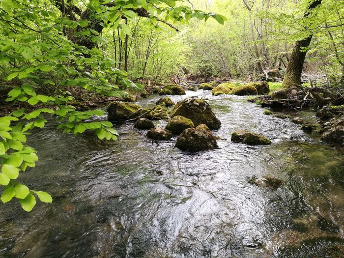 Water Nature Outdoors Green Color Beauty In Nature No People