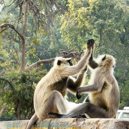 Smellingarmpits Theaxeeffect Monkeybusiness