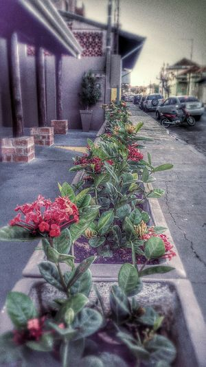 Street Photography Flowers Hanging Out Taking Photos Check This Out Plants Red Flowers Popular Photos Look At This Nature Everywhere