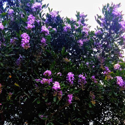 Flowers Nature G-Ds Creation Purple Flowers Vivid Color Tree Flower
