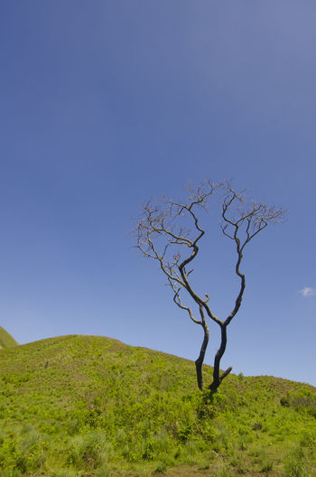 Lonely tree at Wurung crater, Bondowoso, East Java, Indonesia Holiday Holidays Kawah Wurung Landscape_Collection Nature Nature Photography Tree Beauty In Nature Bondowoso Ijen Crater Kawah Ijen Landscape Lone Nature Nature_collection Naturelovers No People Outdoors Tree Tree_collection  Vacation