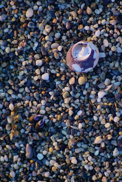 Sand - Raw available Animal Themes Beach Close-up Day Dreaming Of Summer Dreaming Of The Sea High Angle View Holiday Large Group Of Objects Nature No People Outdoors Pebble Pebble Beach Raw Food Seashell Sony A6000 Stone - Object Summer The Purist (no Edit, No Filter) The Secret Spaces EyeEm Diversity