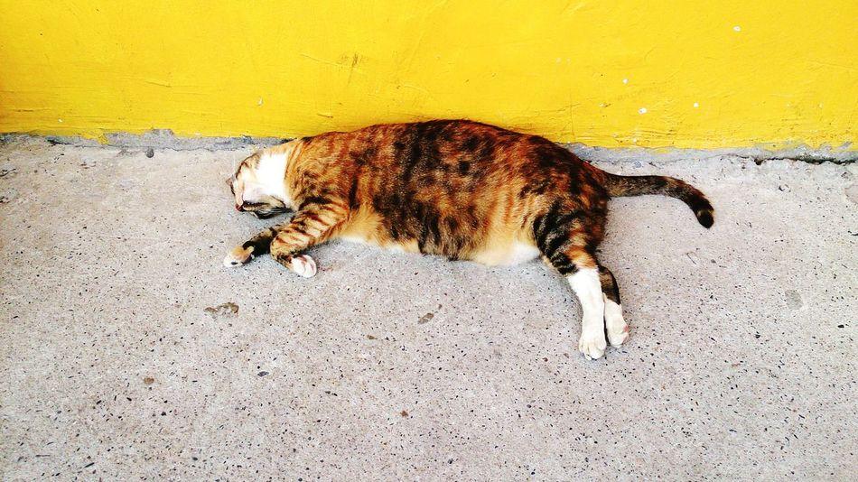 So fat and sleepy cat Cat♡ Houtong EyeEm Best Shots New Taipei City Animals Traveling Fat Cat Sleeping People Watching Taking Photos