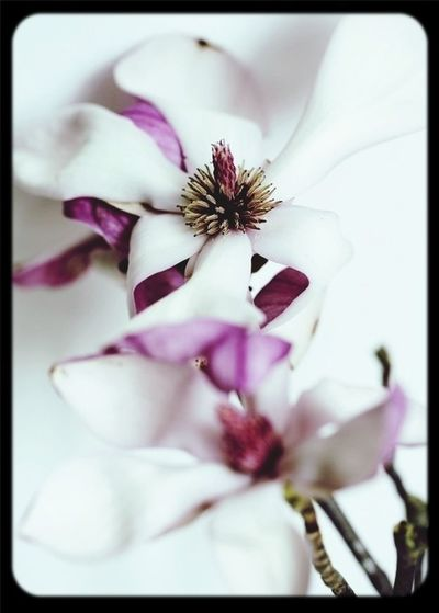 Fleur First Eyeem Photo