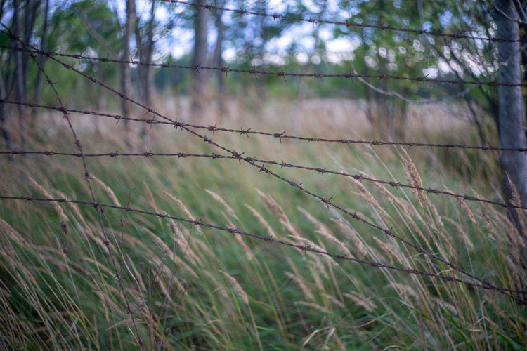 Helios 44-2 Barbed Wire Blocked Close-up Day Environment Fence Fenced Field Focus On Foreground Forest Grass Growth Land Landscape Nature No People Non-urban Scene Outdoors Plant Restricted Restriction Scenics - Nature Timothy Grass Tree