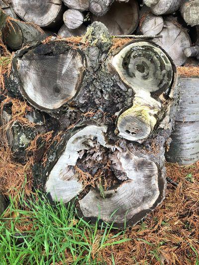 Trees with faces! Deadheads : ) Loggerheads Loghead Treeman Logs Pile Trees Trees Day Land