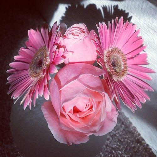 Survivors HappyFriday Flowerface