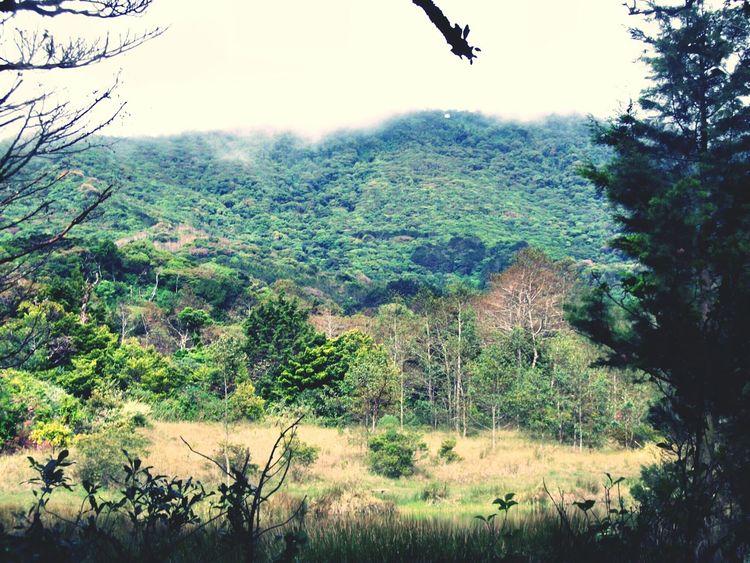 Nature_collection Eye4photography  Mountain TreePorn