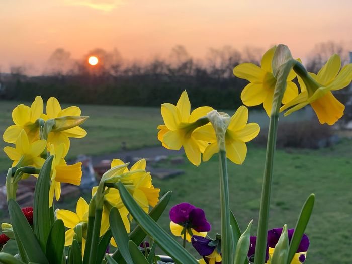 Sundowner in spring Beautiful Sunset EyeEm Selects EyeEm Nature Lover EyeEm Best Shots Spring Flowers Spring Sundown Flowering Plant Growth Outdoors Flower Head Sky