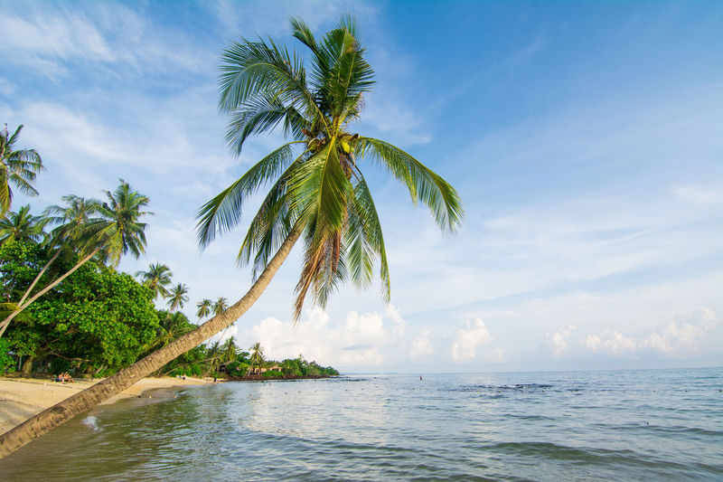 beach view in the summer vacation with coconut palm tree. Beach Beach Nature Beach Photography Beach Travel Beach Trip Beachphotography Beachside Beauty In Nature Coconut Palm Tree Coconut Tree Non Urban Scene Outdoors Palm Tree Scenics Sea And Sky Sea Travel Sea View Seaside Summer Travel Summer Trip Summer Vacation Summer Views Travel Water Showcase July