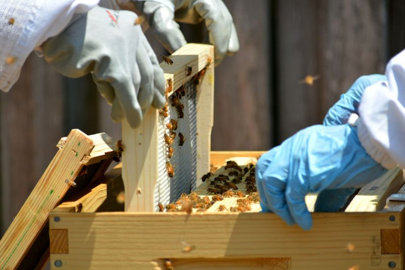 Beekeepers inspecting a young hive