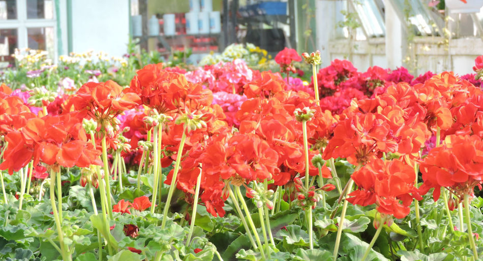2016 Flowering