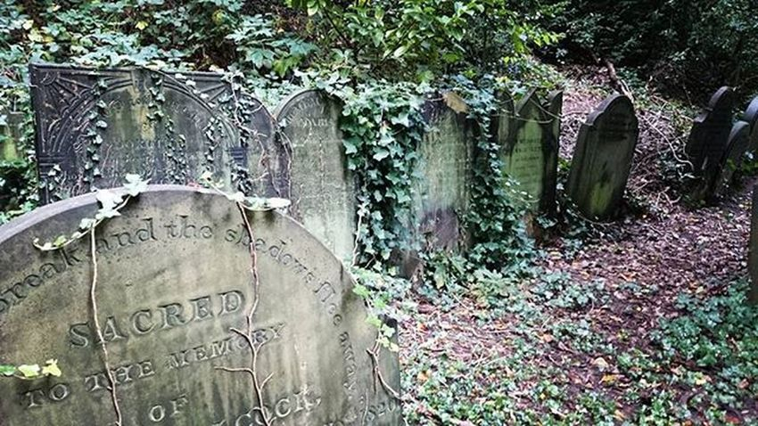 St. James' cemetery: The level of creepiness depends on the weather. Stjamesgardens Stjamescemetery Cemetery Graveyard England Liverpool Tombstones Gravestones Ivy Gloomy Dreary Creepy Wild Beautiful Path Nature Cementerio Tumbas Hiedra Salvaje Deprimente Melancolico