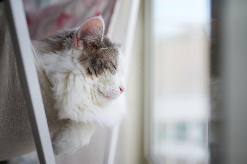 Cat sleeping on hammock beside window at home
