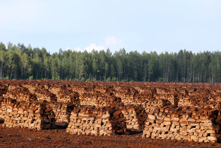 Peat Stacks With Trees Against The Sky