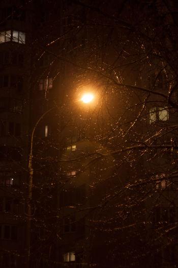 Street lantern lights at winter Circle Lantern Moscow Moscow, Москва Night Night Lights Night Photography Nightlights Russia Snow Snowing Street Street Photography Streetphotography Tree Trees Winter Wintertime снег снег❄ улица улицымосквы фонари фонарисогревают фонарь First Eyeem Photo