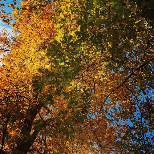 Tree Plant Autumn Beauty In Nature Growth Branch Change Tree Plant Autumn Beauty In Nature Growth Branch Change Low Angle View Nature Tranquility No People Day Leaf Outdoors Scenics - Nature Backgrounds Land Sunlight