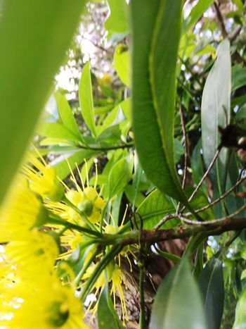 Bright yellow wattle on a grey day Beauty In Nature Nature Yellow Flower Wattle Tree Wattle Flower Grey Sky Grey Day Growth Leaf Green Color Selective Focus Tree Plant No People Day Freshness Close-up Outdoors Fragility Branch Flower (null)Awakening Art Is Everywhere EyeEmNewHere