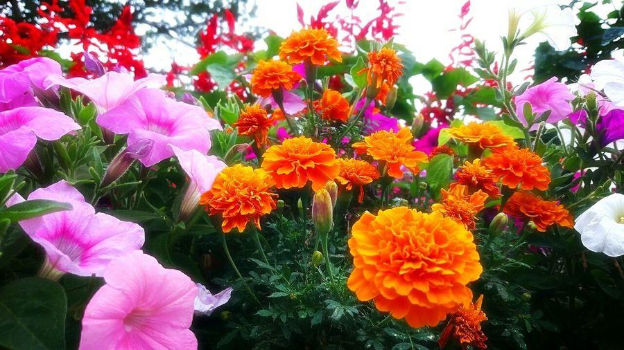 中学校の花壇❤