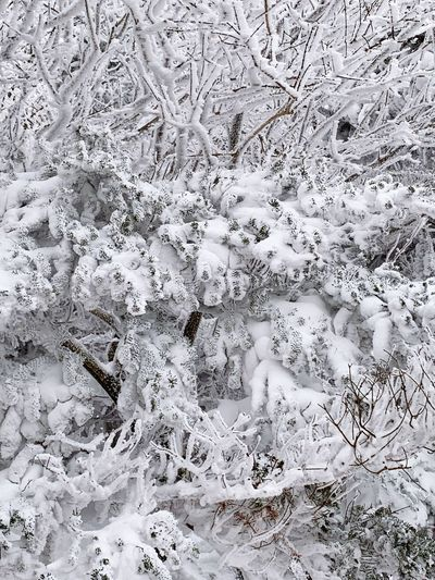 Full Frame Backgrounds No People Pattern Day Nature Close-up White Color Beauty In Nature Textured  Snow Wall - Building Feature Winter Cold Temperature Outdoors