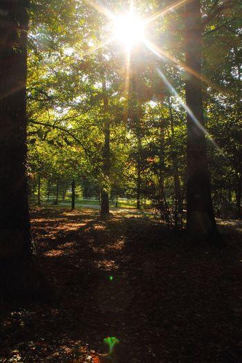Tree Sunlight Outdoors Sun No People Nature Beauty In Nature Sky Tree The Week On EyeEm Beauty In Nature Nature Forest Park Forêt And Nature Vallet France Starburst Sun Starburst StarBurstPhotography Vallet