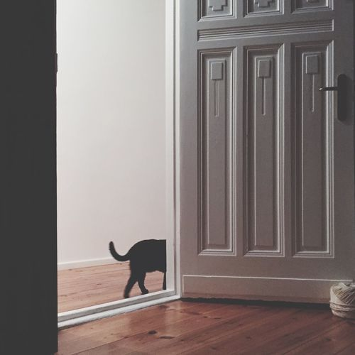 Cat Passing By