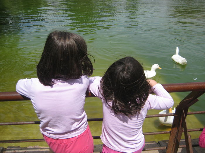 Casual Clothing Day Focus On Foreground Girls Kids Watching Bird Lake Leisure Activity Nature Outdoors Water
