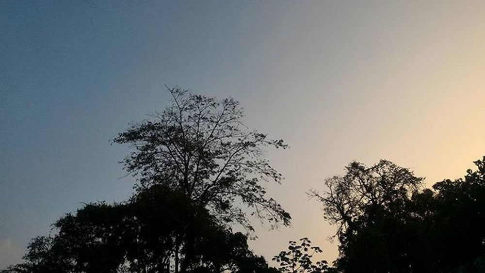 Betosalvestrini Backyard EyeEm Sky Silouette Quickphoto Afternoon Blue Yellow Trees Asus Zenfone2 Swocs @asususa Sunset Art Sancristobal Venezuela Showcase April The Photojournalist – 2016 EyeEm Awards The Great Outdoors - 2016 EyeEm Awards
