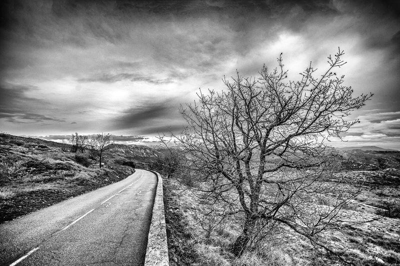 Col de Vence Col De Vence Noir Et Blanc Black And White Tree Arbre Route Road AlpesMaritimes Vence Finding New Frontiers
