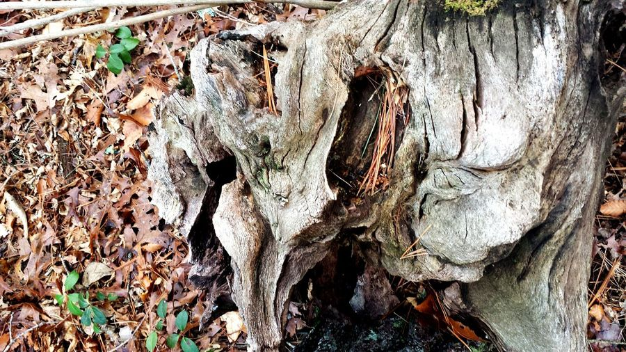 Treestump Artinnature Artofnature Backgrounds No People Nature Leaf Close-up Outdoors Day Beauty In Nature